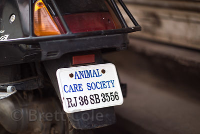 "Motorcycle with a license plate reading ""Animal Care Society,"" Pushkar, Rajasthan, India"