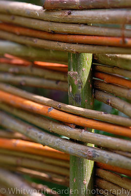 Detail of a woven willow fence. © Rob Whitworth