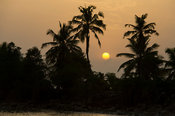 Palm-lined beach at sunset, Axim, Ghana