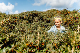 Girl picking sea buckthorn in Thy, Denmark
