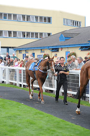 24th Sept 2013 - 5.20pm Handicap Hurdle with winner Listen And Learn