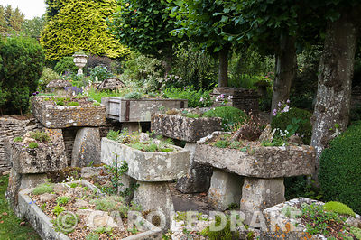 The Troughery, a collection of stone troughs collected from around the farm, planted with alpines. Behind them are pleached l...