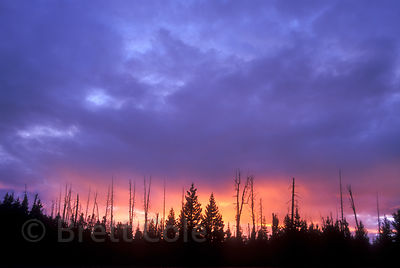 Orange and purple sunset against native Boreal forest in the High Plateau (Caribou Country), near Tweedsmuir Park, British Co...