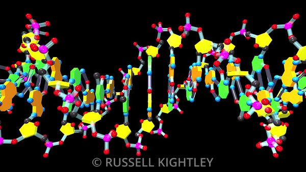 DNA-37-animation-FHD-Russell-Kightley