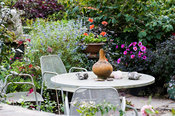 Table and chairs in the front garden surrounded by dahlias, blue caryopteris and pots of succulents. Dyffryn Fernant, Fishgua...