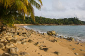 Palm-lined beach, Axim, Ghana