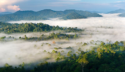 Mist and low cloud hanging over lowland rainforest, just after sunrise. Danum Valley, Sabah, Borneo.