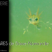 Mares de basse normandie photos