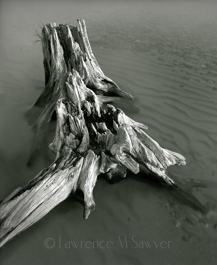 Apostle Islands Driftwood