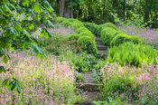 The shady dell garden is a matrix of planting including ferns, pink Silene dioica and orange euphorbia.