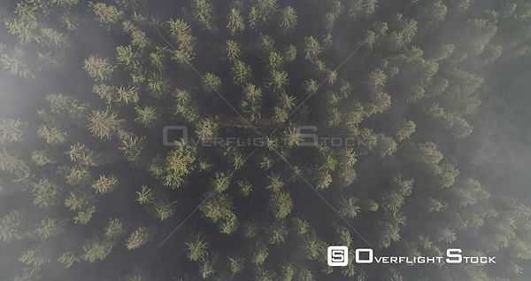 Top Down Drone Video Feldberg Germany Forest on a Misty Morning Sunrise