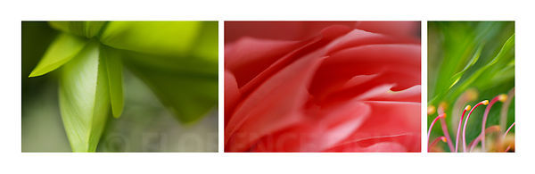 Juxta-green_red-2