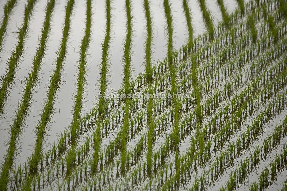 Rice paddy reflections on the road to Tome, north of Matsushima.
