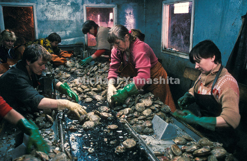 Women endure squalid conditions at a scallop packing plant on Paramushir. One of the island's two newly privatized plants has...