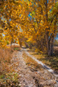 Fall Colors in the Uncompahgre Valley