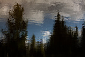 Pine River Reflection