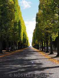Autumn Avenue
