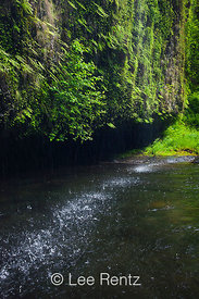 Water Dripping from Cliff into Eagle Creek in Columbia River Gorge