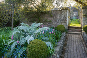 View from kitchen garden into the cutting garden past bed with mounds of silvery cardoon foliage, clipped box, self seeded fo...