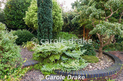 Circular raised bed of shrubs and trees with contrasting foliage including Robinia pseudoacacia 'Lace Lady', Hypericum Magica...