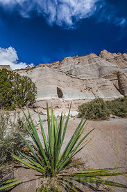 Banana Yucca at Kasha-Katuwe Tent Rocks National Monument