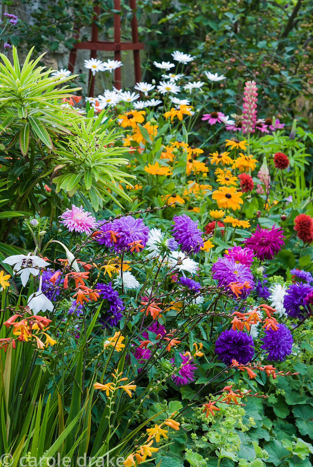 Decorative border punctuated by red wooden obelisks features brightly coloured dahlias, Rudbeckia 'Marmalade', Aster 'Ostrich...