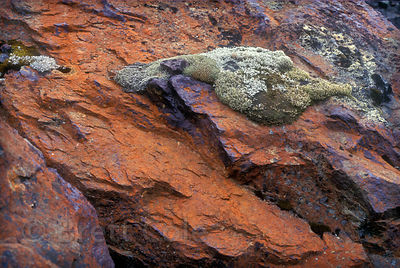 Large ruddy brown volcanic rock along the Tam MacArthur Rim, Oregon Cascades.