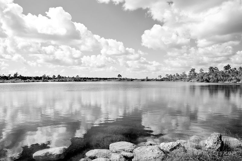 PINE GLADES LAKE EVERGLADES NATIONAL PARK FLORIDA BLACK AND WHITE