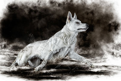 Art-Digital-Alain-Thimmesch-Chien-823