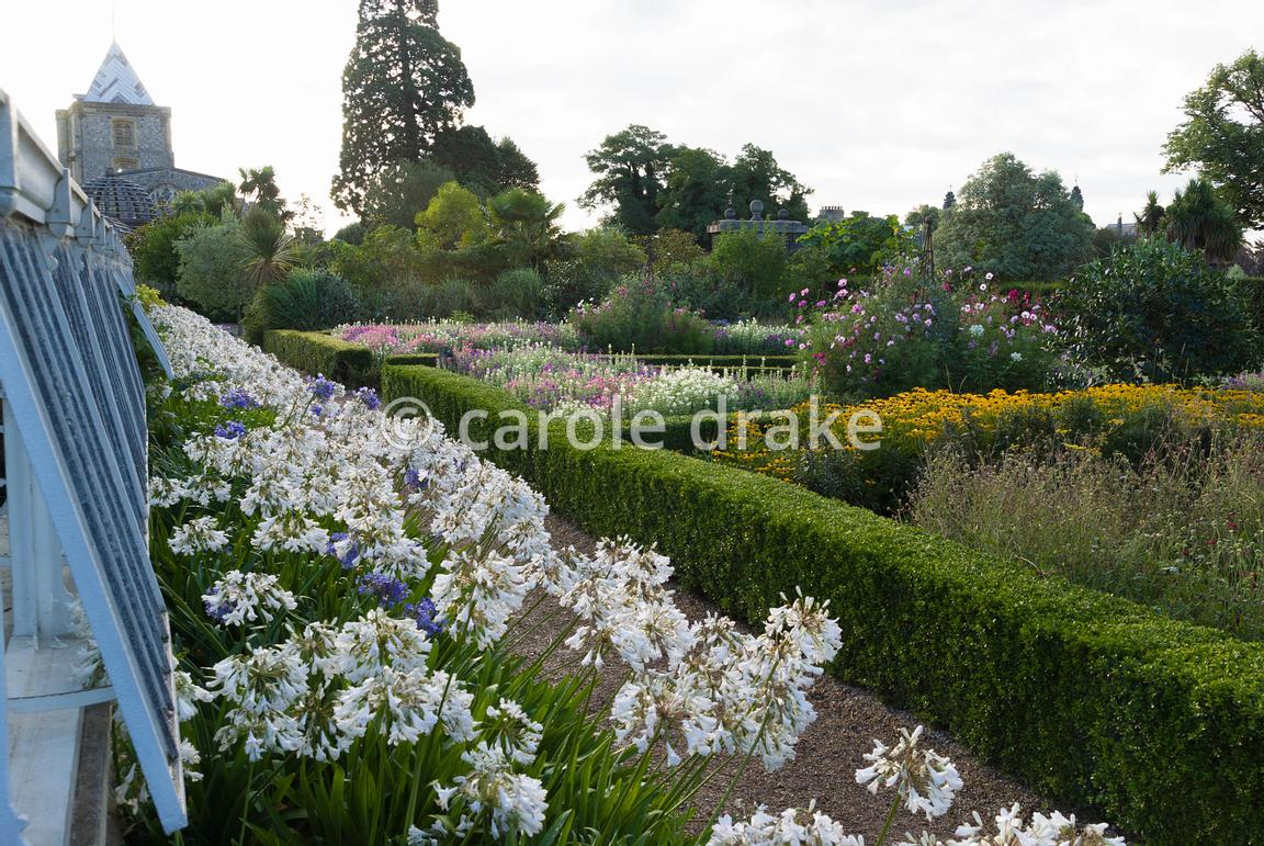 A line of white agapanthus flowers along the lean-to greenhouse beside box edged beds containing a welath of flowers and vegetables in the Organic Kitchen and Flower Garden. Arundel Castle Gardens, Arundel, West Sussex, UK
