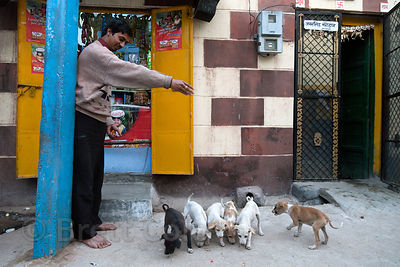 A man feeds stray puppies in Jodhpur, Rajasthan, India