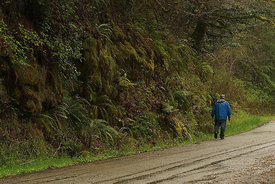 Moon creek road, Coquille, Oregon