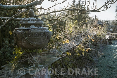 Light illuminates wisteria twined around balustrades and urns beside the Rainbow Garden. Kingston Maurward Gardens, Dorcheste...