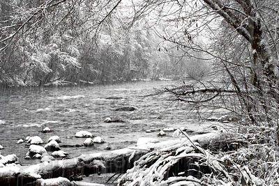 Winter snowstorm along the native forests of the McKenzie River in the Oregon Cascades.