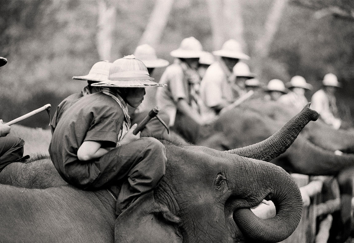'Golden Triangle Working Elephants' 1998: Photographer: Neil Emmerson. Image shot on Ilford Delta 400 using Nikon F3HP