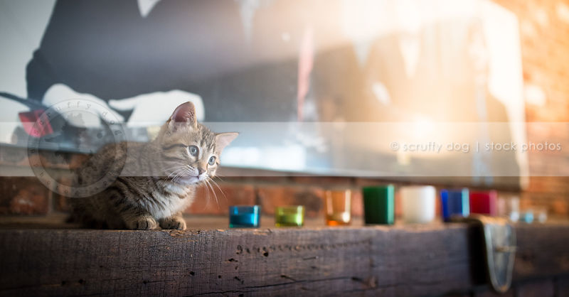 cute brown tabby kitten crouching on fireplace mantle indoors at home