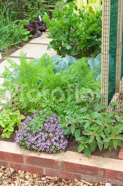 Photo de Petit jardin potager, jardin potager en carré, bordure d ...