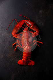 Boiled red Lobster on black background