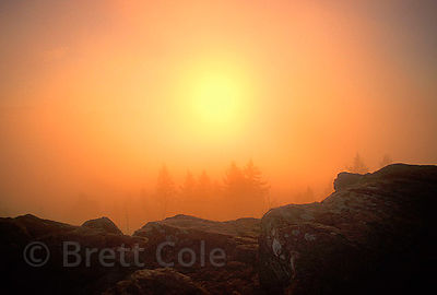 Mid-day fog burns orange from the sun atop Spencer's Butte, Willamette Valley, Oregon.