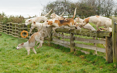 The Cottesmore Hunt at Hill Top Farm 10/12
