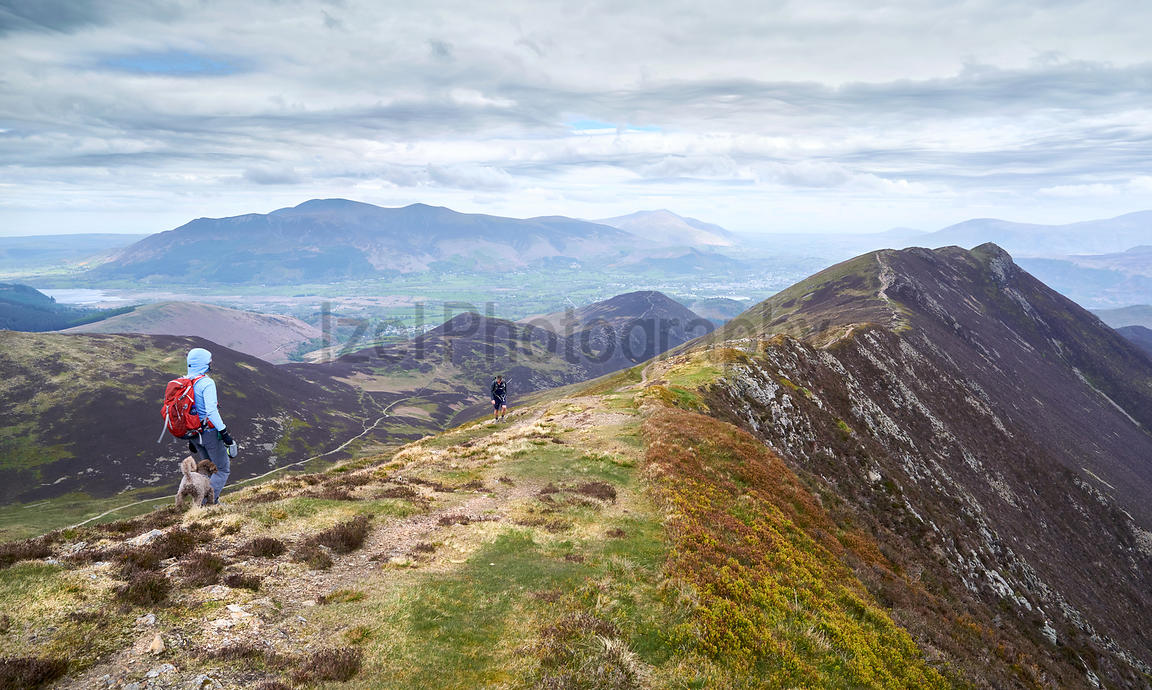 A hiker mountain walking  in the English Lake District, UK. Descending Scar Crags and approaching Causey Pike.