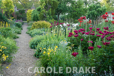 Herbaceous borders in the kitchen garden include oriental poppies, Papaver orientale 'Beauty of Livermere', peonies, tall yel...