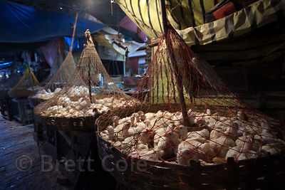 Chickens wait in baskets to head to slaughter, Newmarket, Kolkata, India.