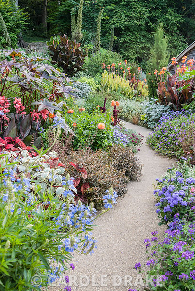 Planting around the house includes Saliva uliginosa, cannas, dahlias, ricinus, ageratum, heucheras, plectranthus and tall Ech...
