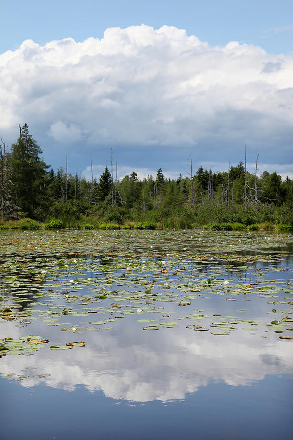 lake in Maine with lilly pads