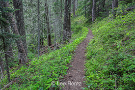 Upper Dungeness Trail Toward Boulder Camp in Olympic National Forest