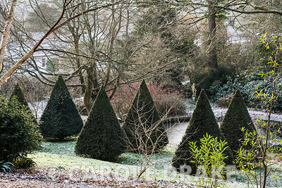 An avenue of clipped yew pyramids runs through the centre of the garden.