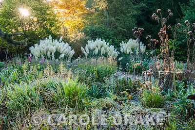 Herbaceous and grasses garden features large clumps of pampas grass, Cortaderia, phormiums, grasses such as miscanthus and he...