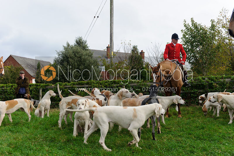 Peter Collins with hounds - Quorn at Barrowcliffe 1-11-13