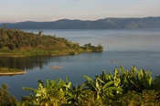 Rwanda, cultivation on the shores of Lake Kivu
